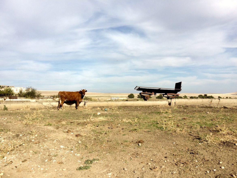 Kuh am Rande des Dorfes