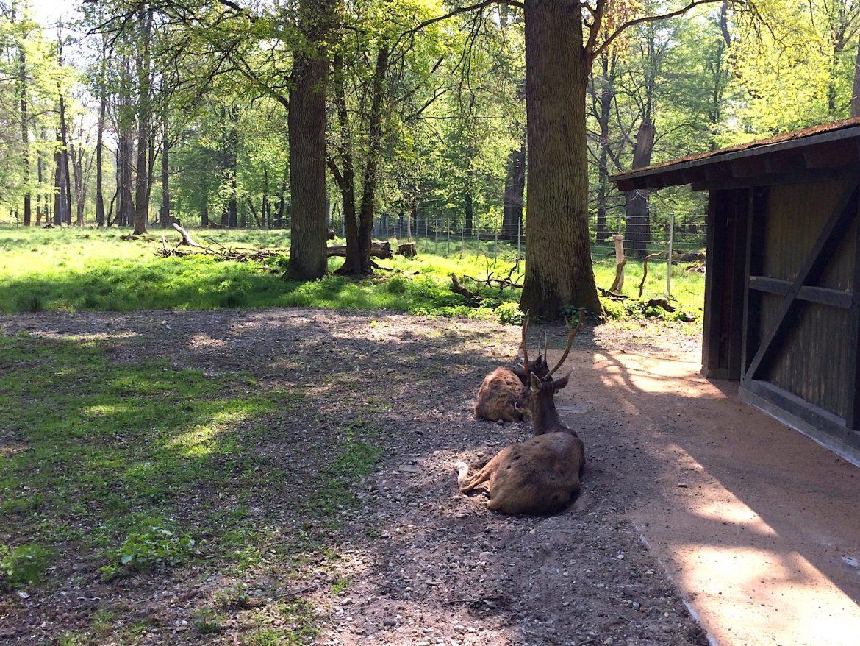 Karlsruhe Tierpark Oberwald