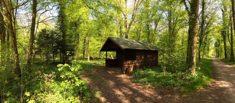 Kleine Hütte mitten im Karlsruher Wald