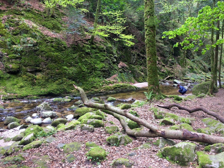 Schwarzwald - Geroldsauer Wasserfälle