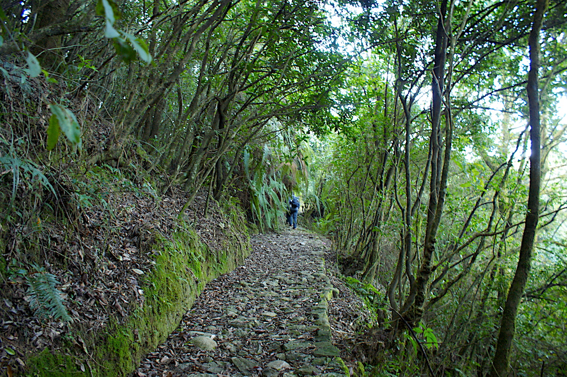 Shivapuri Nagarjun National Park stairs