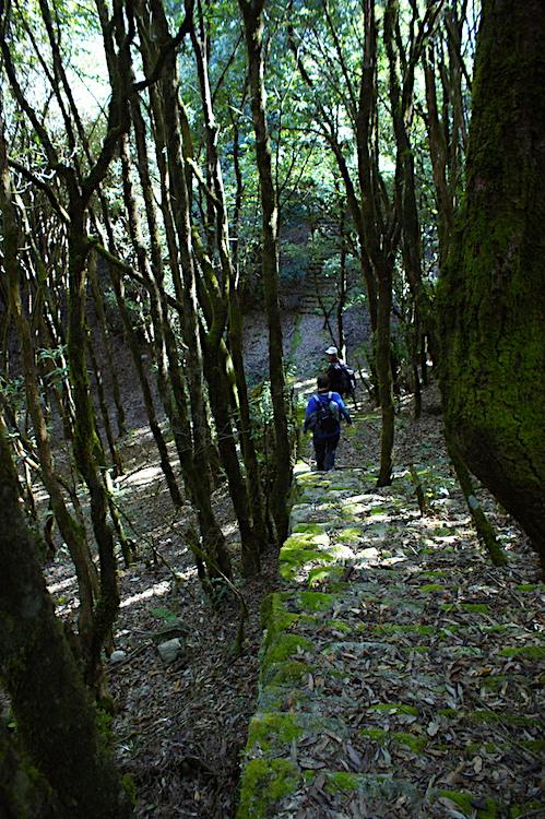 Shivapuri National Park Treppen